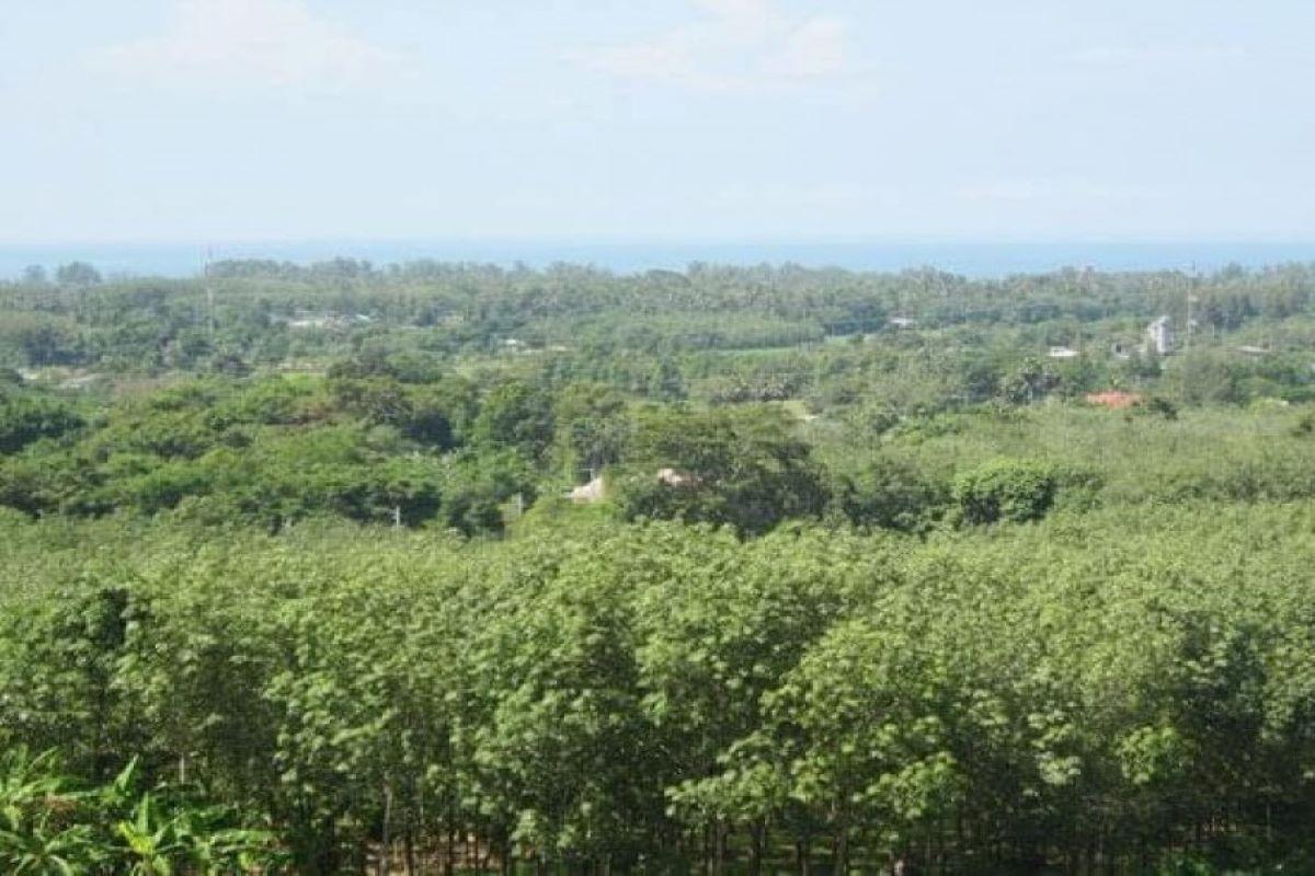 6 Rai or 9988 sqm Sea View Land for Sale in Mai Khao, Phuket