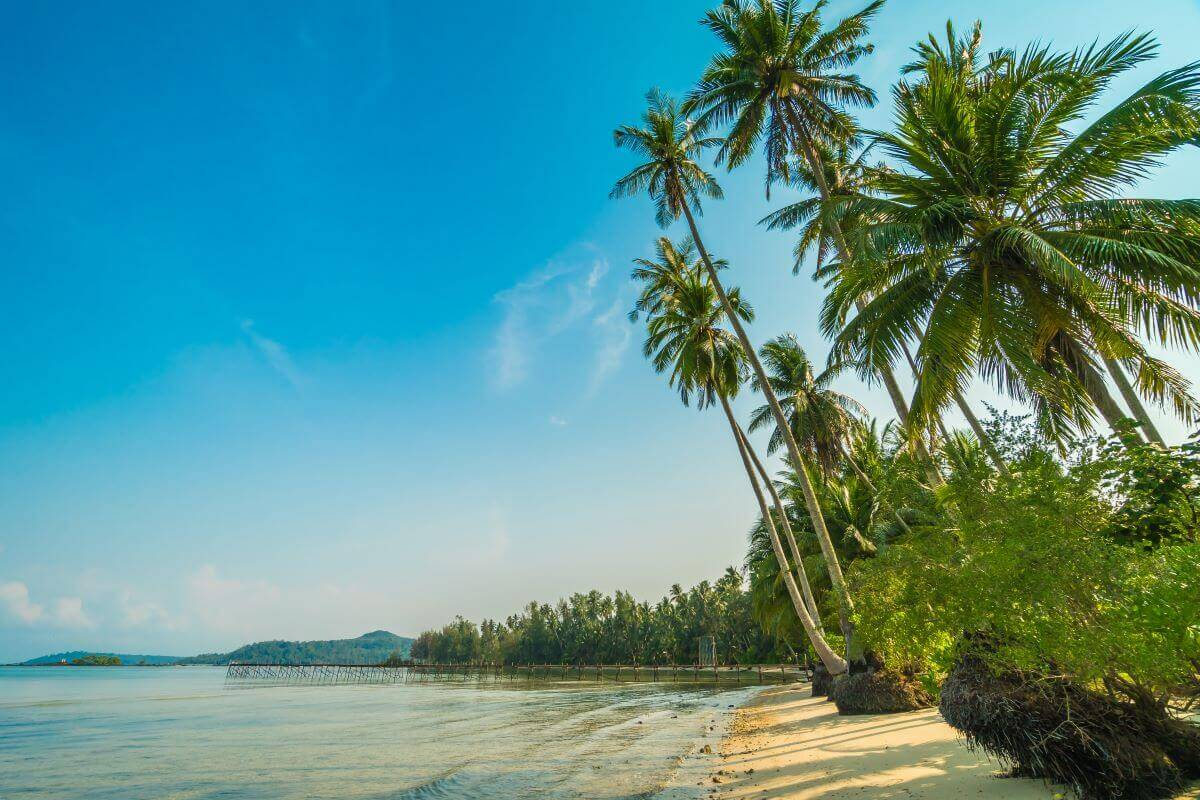 245.55 Rai Beachfront Land for Sale in Khao Lak, Phang Nga