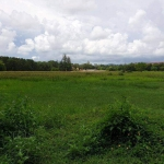11 Rai (17,600 sqm) Can be Subdivided Land for Sale near Bang Tao Beach and Catch Beach Club, Phuket