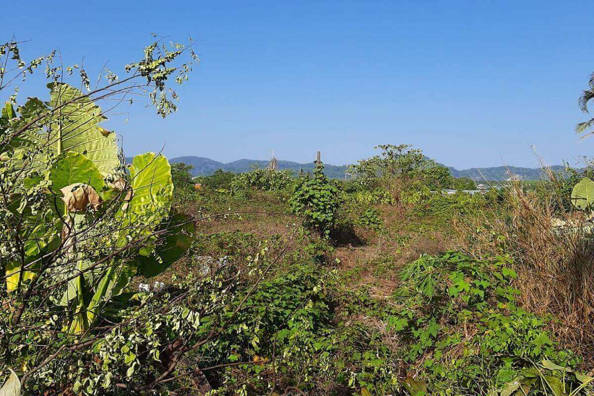 1 Rai (1,600 sqm) Plot for Sale in Pasak Soi 8 in Cherng Talay, Phuket