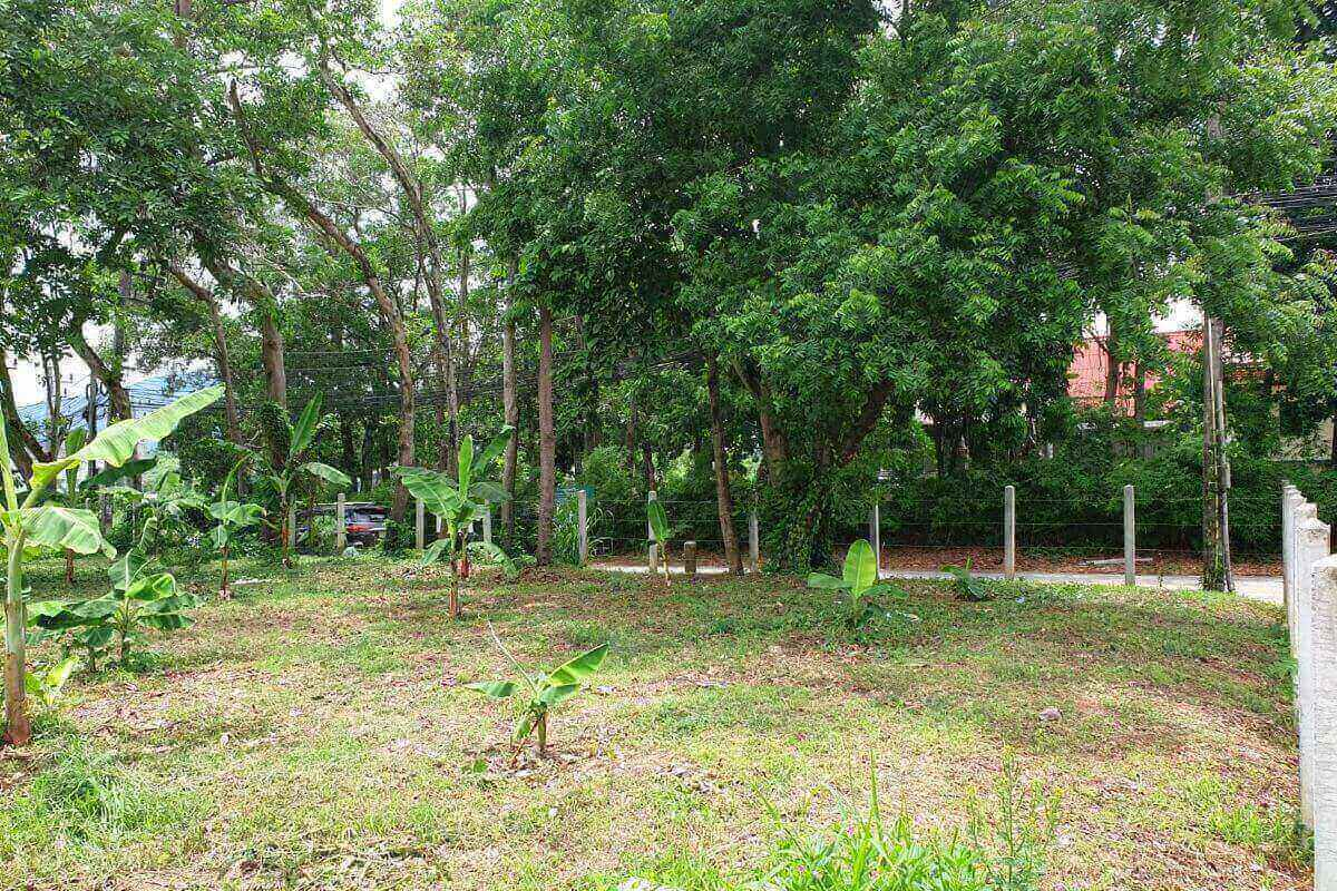 1,500 sqm or 375 sqw Land for Sale Walking Distance to Rawai Seafront, Phuket